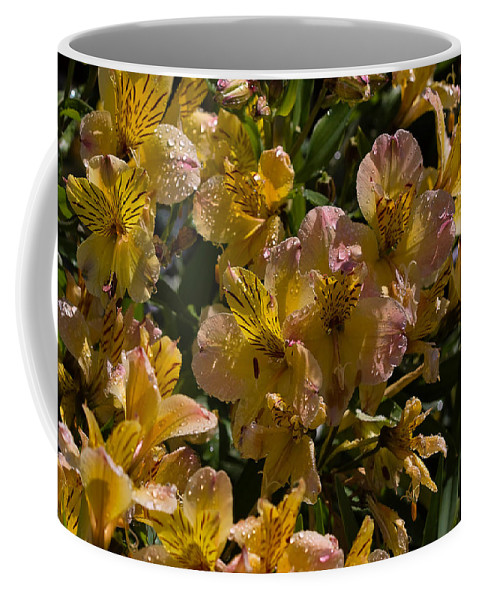 Flower Coffee Mug featuring the photograph Friendship Yellow Alstroemeira by Louise Heusinkveld