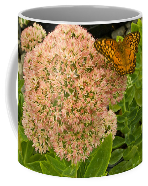 Fritillary Coffee Mug featuring the photograph Fritillary On Flower by Douglas Barnett