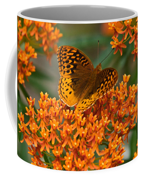 Frittalary Coffee Mug featuring the photograph Frittalary And Milkweed by Douglas Barnett