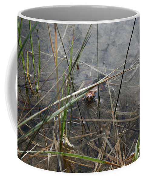 Frog Water Mother Nature Wild Reptile Eyes Lake Marsh Coffee Mug featuring the photograph Frog Home by Andrea Lawrence