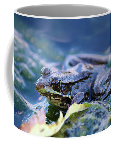 Frog Coffee Mug featuring the photograph Frog In Water by Amber D Hathaway Photography