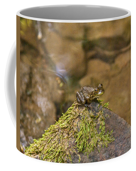 Cumberand Coffee Mug featuring the photograph Froggy On A Hill by Douglas Barnett