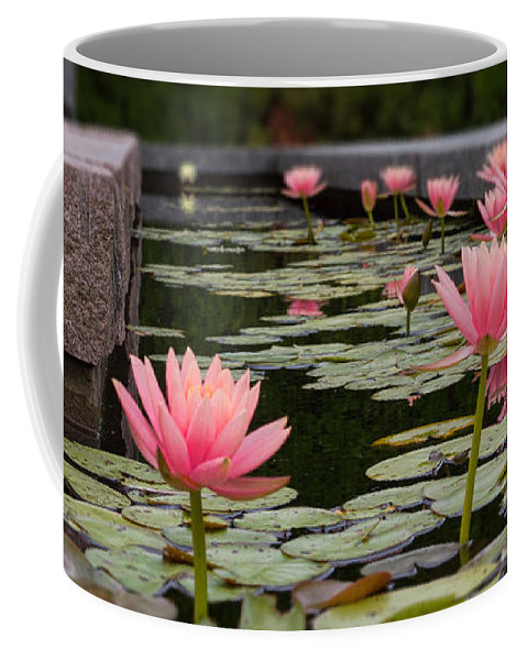 Lily Pads Coffee Mug featuring the photograph Frog's Eye View by Terry Weaver