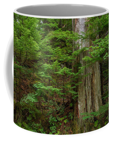 Grove Of Patriarchs Coffee Mug featuring the photograph From Grove Of The Patriarchs 2 by Greg Nyquist