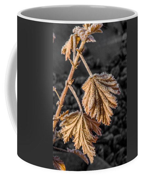 Snow Coffee Mug featuring the photograph Frosted Flake by Paul Freidlund