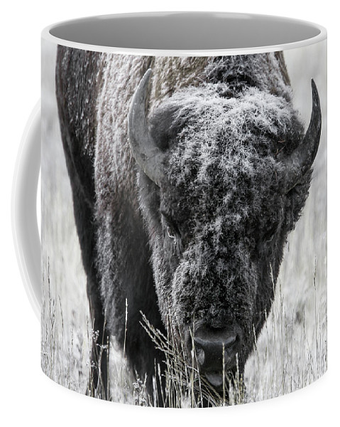Bison Coffee Mug featuring the photograph Frosted Over by Ronnie and Frances Howard