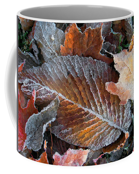 Leaves Fall Autumn Orange Red Brown Photograph Photography Photographer Coffee Mug featuring the photograph Frosted Painted Leaves by Shari Jardina