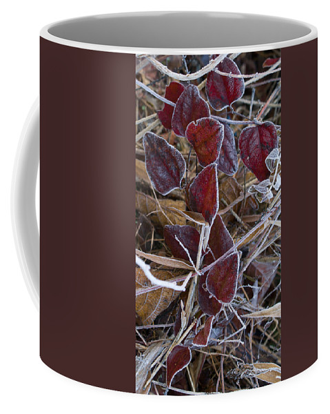 Red Coffee Mug featuring the photograph Frosted Red Green Briar by Douglas Barnett