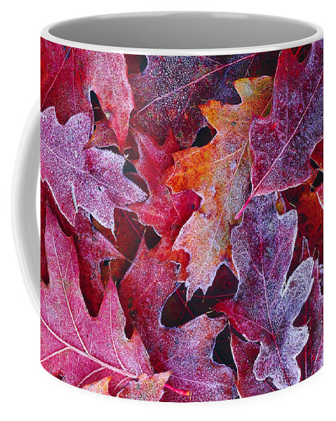 Red Oak Coffee Mug featuring the photograph Frosted Red Oak Leaves by Tony Beck