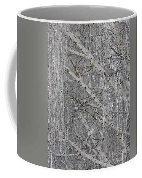 White Coffee Mug featuring the photograph Frosty Birch Tree by Carol Groenen