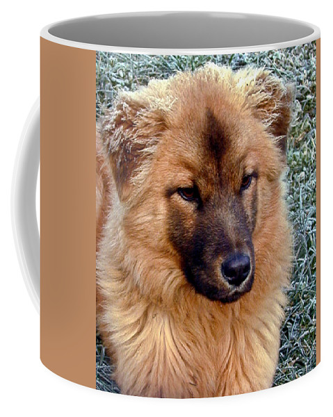 Dog Coffee Mug featuring the photograph Frosty Dog by Douglas Barnett