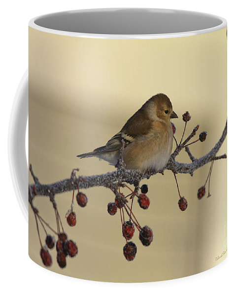 Finch Coffee Mug featuring the photograph Frosty Perch by Deborah Benoit