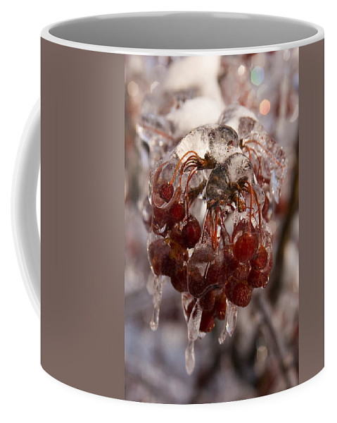 Berry Berries Red Frozen Ice Icy Snow White Spark Tree Winter Storm Glare Sun Reflection Coffee Mug featuring the photograph Frozen Berries by Andrei Shliakhau