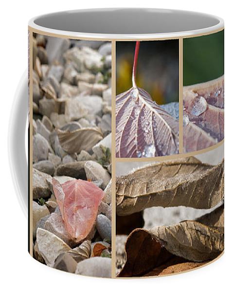 Lisa Knechtel Coffee Mug featuring the photograph Frozen Dew by Lisa Knechtel