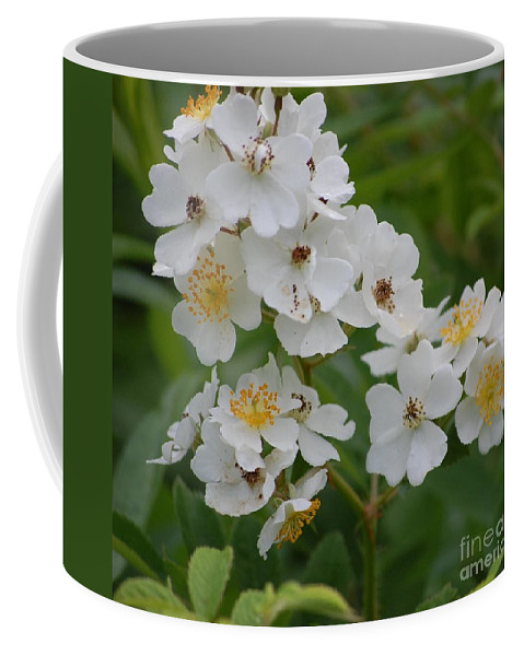 Coffee Mug featuring the photograph Fruity Potential by David Lane