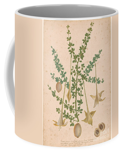 Mark Catesby 1683-1749 Frutex Spinosus. Flower Coffee Mug featuring the painting Frutex Spinosus by MotionAge Designs