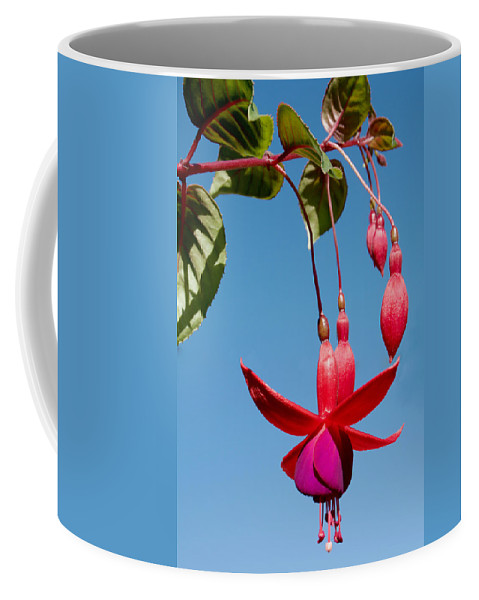 Fuchsia At Pilgrim Place In Claremont Coffee Mug featuring the photograph Fuchsia At Pilgrim Place In Claremont-california by Ruth Hager