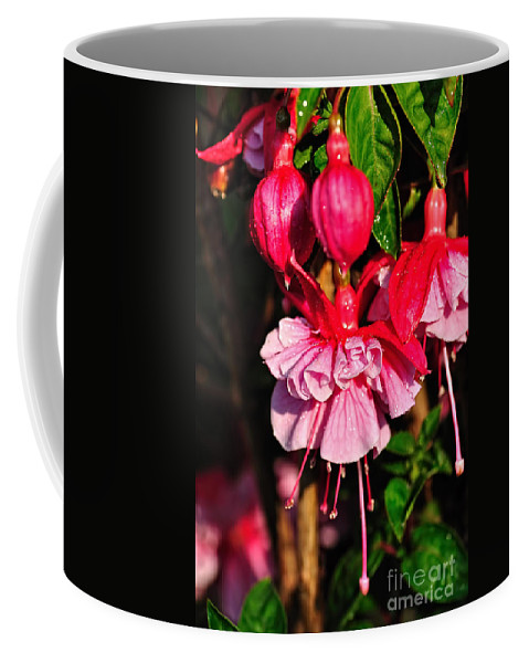 Photography Coffee Mug featuring the photograph Fuchsias With Droplets by Kaye Menner