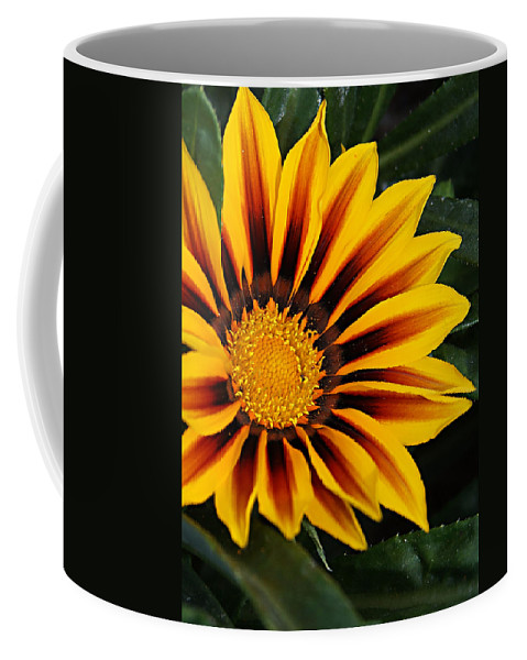 Flower Coffee Mug featuring the photograph Full Bloom by Chauncy Holmes