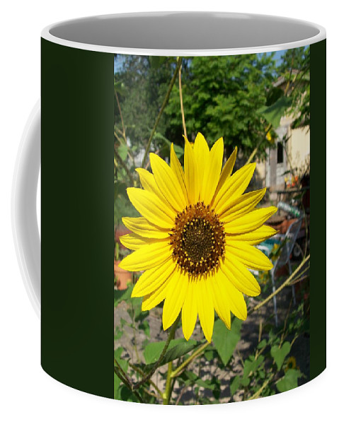 Sunflower Coffee Mug featuring the photograph Full Face by Laurette Escobar
