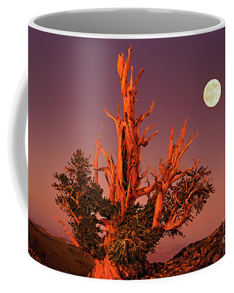 North America Coffee Mug featuring the photograph Full Moon Behind Ancient Bristlecone Pine White Mountains California by Dave Welling