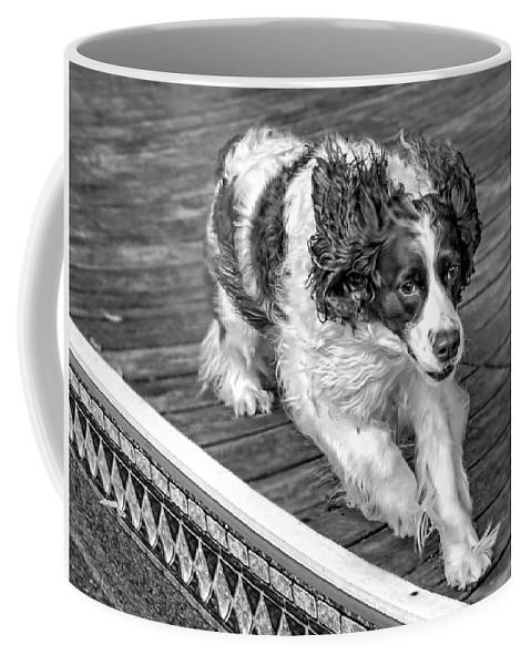 Steve Harrington Coffee Mug featuring the photograph Full Tilt - English Springer Spaniel Bw by Steve Harrington