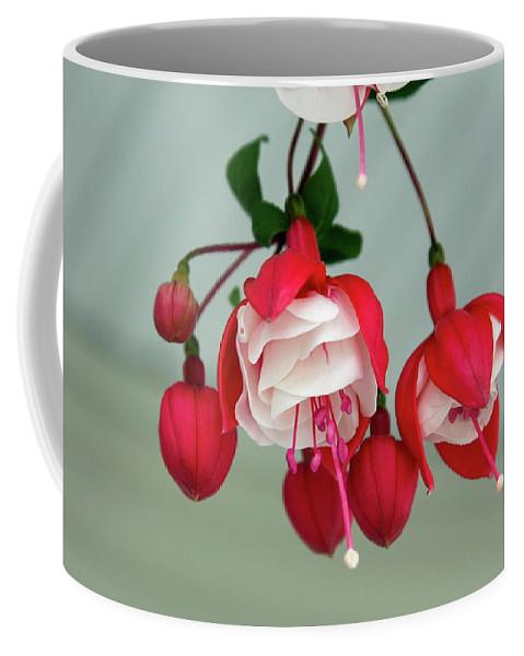 Fuschia Coffee Mug featuring the photograph Fuschia by Sally Weigand