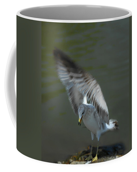 Seagull Coffee Mug featuring the photograph Gabriel The Gull by Donna Blackhall
