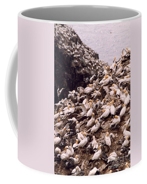 Gannet Coffee Mug featuring the photograph Gannet Cliffs by Mary Mikawoz