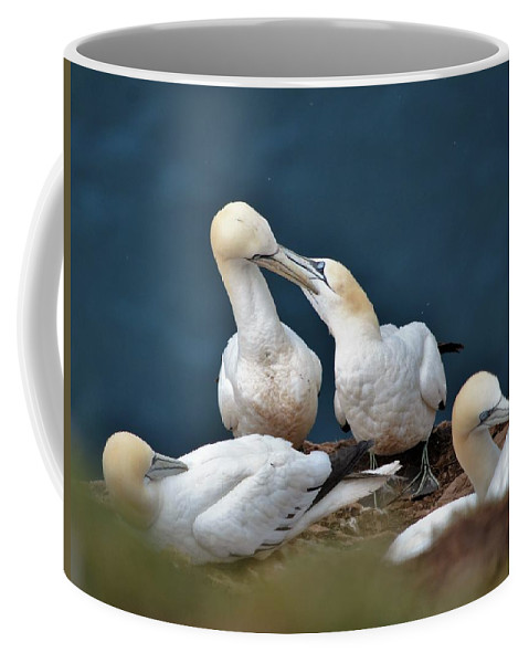 Nature Coffee Mug featuring the photograph Gannet Feeding Young by Graham Harding
