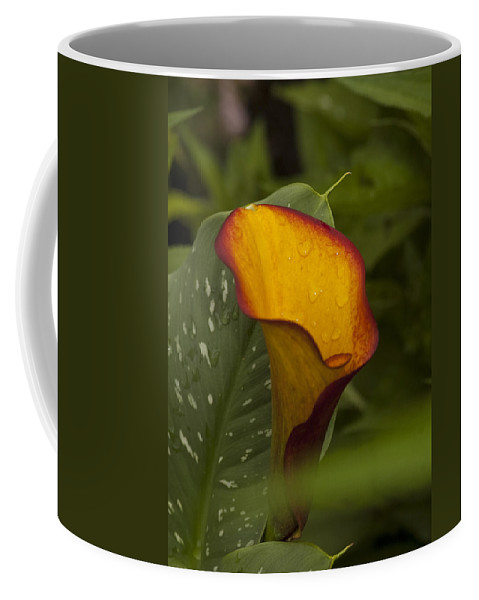 St. Clair County Coffee Mug featuring the photograph Garden Beauty by Paul Cannon