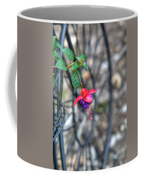 Fuchia Coffee Mug featuring the photograph Garden Delight by Douglas Barnett