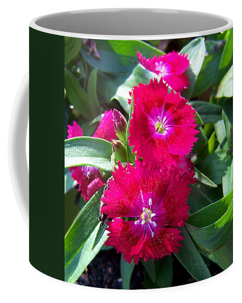Dianthus Coffee Mug featuring the photograph Garden Delight by Sandi OReilly