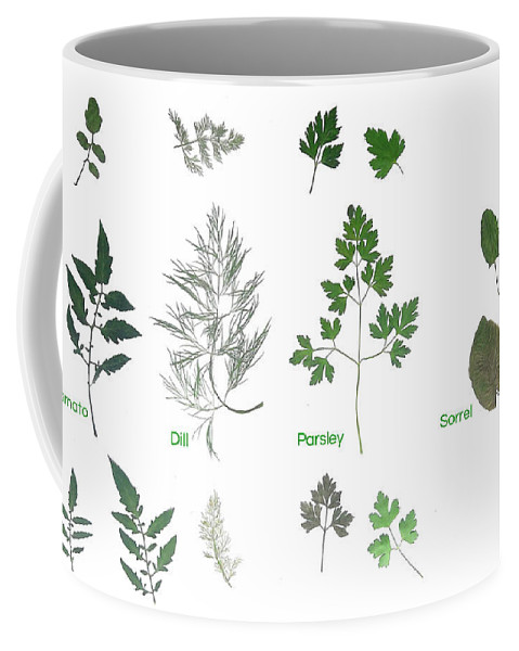 Garden Leaves Coffee Mug featuring the photograph Garden Herbs by Tibi K
