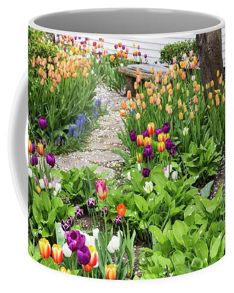 Tulip Coffee Mug featuring the photograph Gardens Of Tulips by Terri Morris