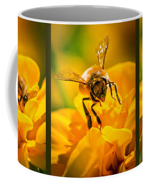 Bees Coffee Mug featuring the photograph Gathering Pollen Triptych by Bob Orsillo