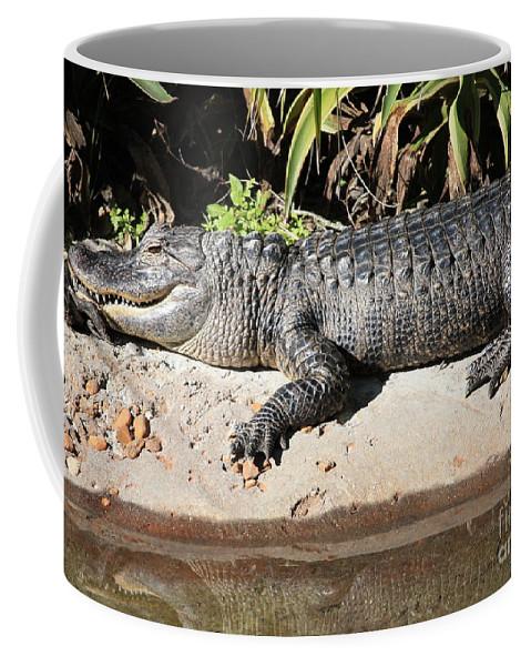 Gator Coffee Mug featuring the photograph Gator by Carol Groenen