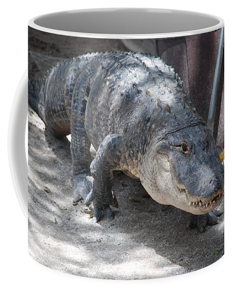 Alligator Coffee Mug featuring the photograph Gator On The Move by Rob Hans
