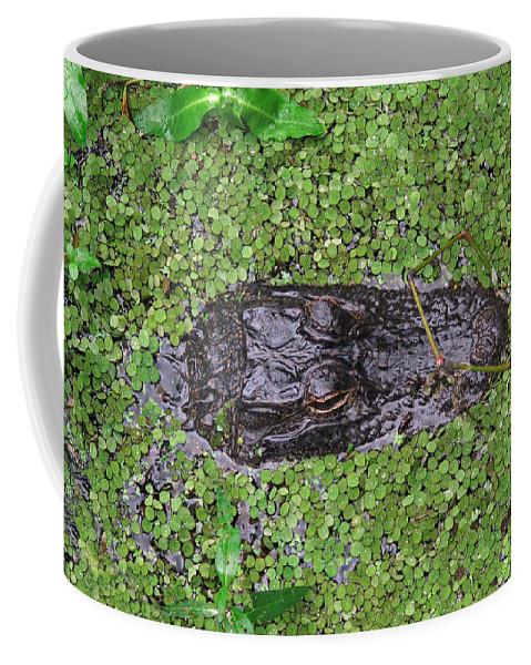 Gator Coffee Mug featuring the photograph Gator Rising by Peg Urban