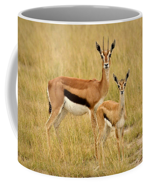 Africa Coffee Mug featuring the photograph Gazelle Mother And Child by Jack Daulton