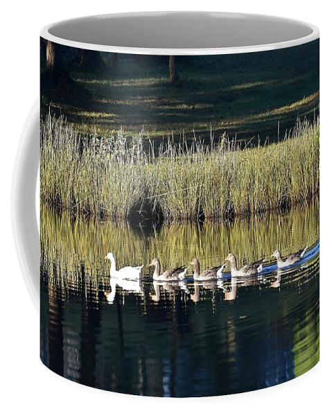 Geese Coffee Mug featuring the photograph Geese Mother And Young by Kim Bemis