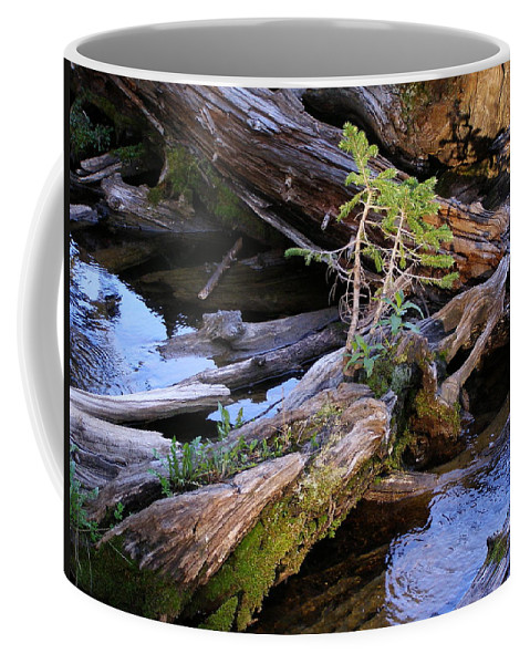 Water Coffee Mug featuring the photograph Generations by DeeLon Merritt