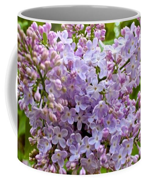 Purple Coffee Mug featuring the photograph Gentle Purples by Mario MJ Perron