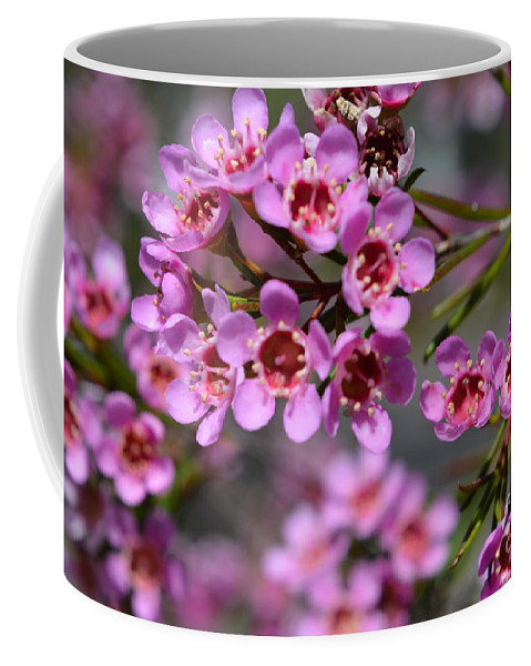 Wax Flower Coffee Mug featuring the photograph Geraldton Wax Flowers, Cwa Pink - Australian Native Flower by Geraldine Cote