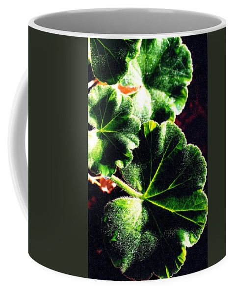 Geraniums Coffee Mug featuring the photograph Geranium Leaves by Nancy Mueller