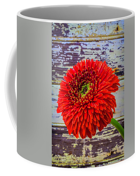 Mood Coffee Mug featuring the photograph Gerbera Daisy Against Old Wall by Garry Gay