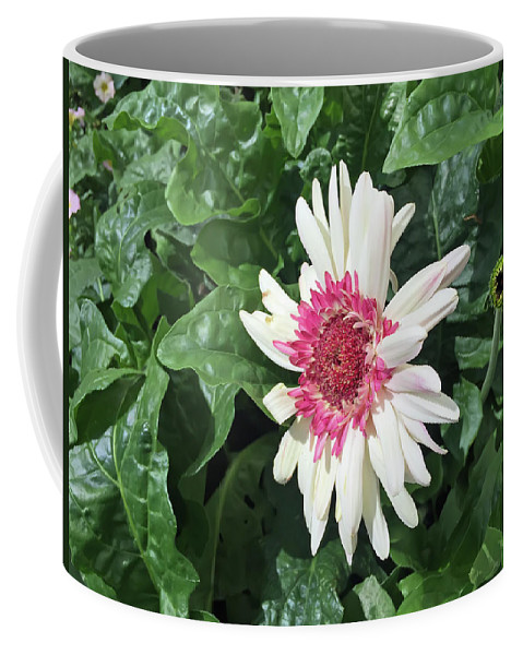 Gerbera Daisy Coffee Mug featuring the photograph Gerbera Daisy And Bud by Aimee L Maher ALM GALLERY