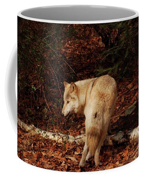 Wolf Coffee Mug featuring the photograph Get Back It's My Stick by Lori Tambakis