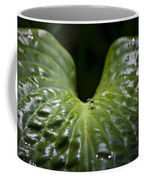 Hosta Coffee Mug featuring the photograph Getting A Drink by Teresa Mucha