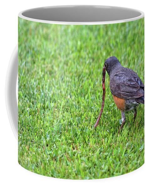 American Robin Coffee Mug featuring the photograph Getting Breakfast by Linda Kerkau